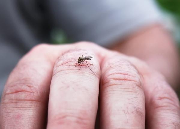 Как да отблъснем комарите най-ефективно?
