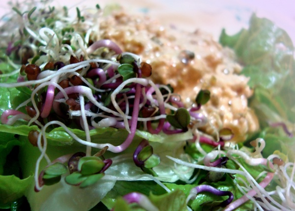 6  богати на ензими храни, които подобряват храносмилането, балансиращите хормони и забавят стареенето