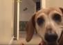Той мрази да оставя кучето си само, когато отива на работа, затова му измисли забавление!