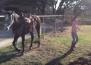 Малки момичета танцуват на известна хип-хоп песен. Но вижте какво прави коня !