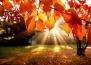 9 прекрасни есенни цитата, с които да отпразнуваме сезона
