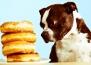 Кои храни и напитки трябва да избягвате да давате на домашните си любимци