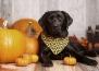 Още 5 здравословни храни, полезни и за кучета