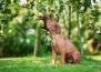 Могат ли кучетата да ядат ябълки?