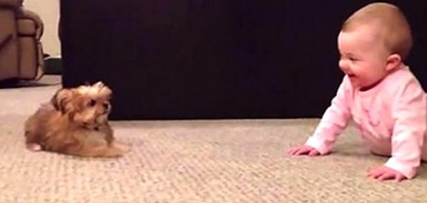 """Бебешкият """"говорещ с кучета"""" си приказва с малкия Шорки"""