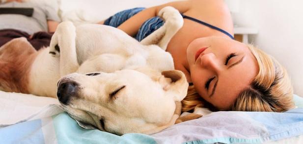 Изследователите откриват, че споделянето на леглото с домашен любимец подобрява съня и чувството за сигурност