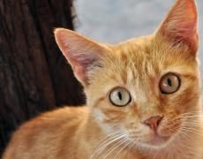 12 предимства на котката пред мъжа