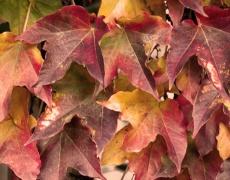 Цветовете на есента