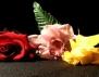 """Нова книга: """"Цветя за Зоуи"""" на Антония Кер"""