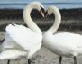 Хормоните диктуват правилата на любовта