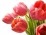 Какъв е в леглото зависи от цветята, които подарява (част 2)