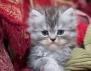 Най-сигурната аларма – котката