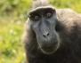 Човек или маймуна
