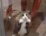 Как да изперете котката си?