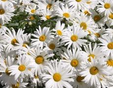 Как да разбираме езикът на цветята? (част 2)