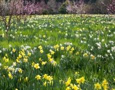 Пролетна диета за бодрост и имунитет