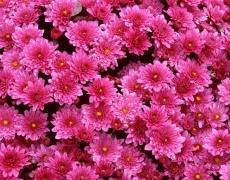 Как да разбираме езикът на цветята?(част 1)