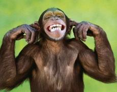 Какъв вид маймуна е вашият мъж?