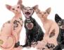 Новата човешка лудост – татуирани котки