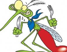 Как да се спасим от комарите?