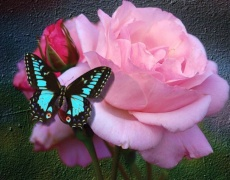 Ефектът на пеперудата