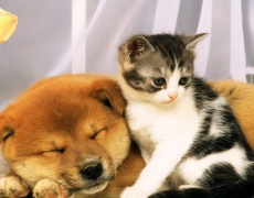 Няколко любопитни фактa за кучетата и котките