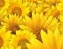 Каква жена си според хороскопа на цветята? (част 1)