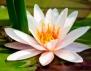 Каква жена си според хороскопа на цветята? (част 2)