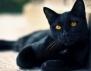 Келтски хороскоп! Зодия Котка