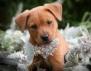 Кой всъщност е виновен, че бездомните кучета хапят?