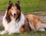 Какъв мъж е според неговото куче: Коли