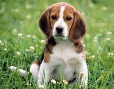 Какъв мъж е според неговото куче: Гонче