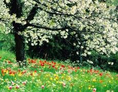 """Цветница е! Честит празник на всички """"цветя""""!"""
