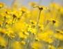 """Нови книги: """"Дивото цвете"""" на Кимбърли Фрийман"""
