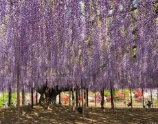 Най-красивото дърво в света! (снимки)