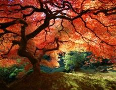 Снимките, които ще ви покажат Рая на земята