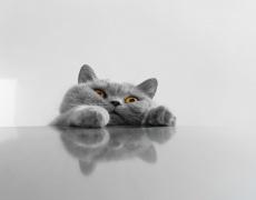 8 причини да си вземете котка