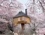 Уникално! Най-красивите къщи на дърво