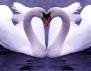 Трогателната история на една истинска Любов (видео)