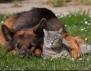 Удивително! Котка се гушка с куче