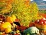Най-полезните есенни супер плодове