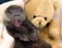 Най-усмихнатите животни (снимки)